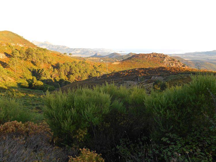 W oddali widok na Calvi, cytadelę oraz zatokę.