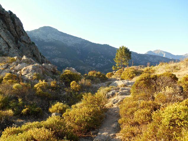 Pomiędzy Muravella (625 m) i Bocca di u Ravalente (616 m). Przejście przez grzbiet w kierunku lasu Sambuccu, który doprowadzi mnie do przylądka Arghjova (820 m).