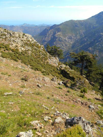 Widok na las de la Fratte (Bois de la Fratte) oraz dolinę o tej samej nazwie.