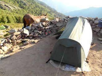 Jeden z tych koni obudzi mnie przed północą chodząc wokół mojego namiotu i sprawdzając, czy nie zostawiłem przez przypadek czegoś do przekąszenia.