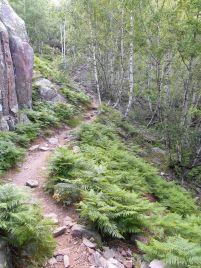 Podejście po szlaku w stronę źródła Leccia Rossa i następnie szlak pokrywa się kamieniami…