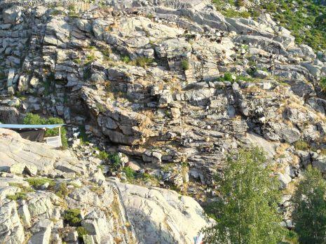 Na zdjęciu widoczne są owce należące do Bergerie d'E Radule.