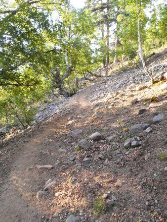 Pierwsza część szlaku przechodzi przez las Valdu Niellu. W lesie tym jeszcze w latach pięćdziesiątych znajdowały się drzewa sosnowe (pin laricio) o średnicy sześciu metrów i wysokości trzonu 36-sciu metrów.