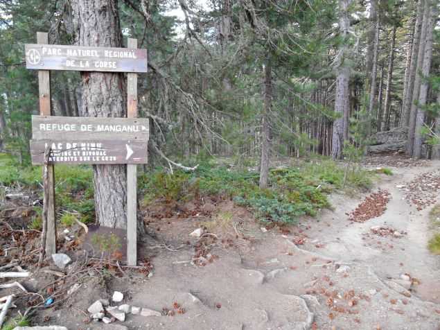 Szlak prowadzi dalej przez las Valdu Niellu (powierzchnia lasu – 4 436 hektarow).