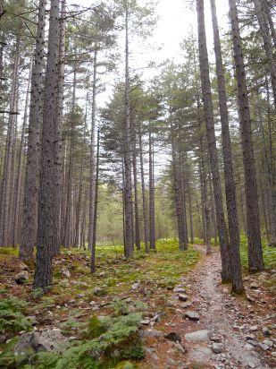 Przejście przez sosnowy las doprowadzi nas do Bergeries (owczarni) de Tolla. Idąc przez las napotkam dwóch wędrowców (syn z ojcem, o których wspominałem we wpisie ze schroniska Carrozzu). Widzieliśmy się również w schronisku Manganu i Petra Piana. Informują mnie, że decydują się na zejście ze szlaku, obejście schroniska Onda i dojście nizinami do Vizzavony. Pogoda nie dopisuje, przewidywane są cały czas porywy wiatru i być może burze, a następny etap ze schroniska Onda to m.in. wejście na grań na wysokość 2000 metrów.