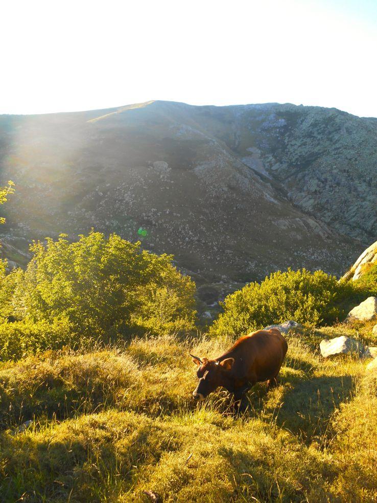 Na początku zejście w stronę doliny Asinau.