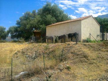 A cień to rzecz drogocenna na Korsyce ;-).