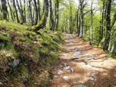 Powrotna droga w stronę przełęczy Schlucht.