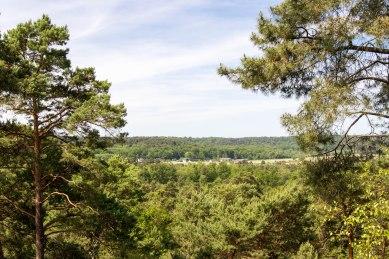 Widok na zachód w stronę hipodromu Fontainebleau.