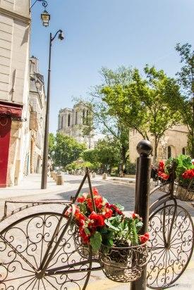 Widok na katedrę Notre-Dame w pobliżu lewego brzegu Sekwany.