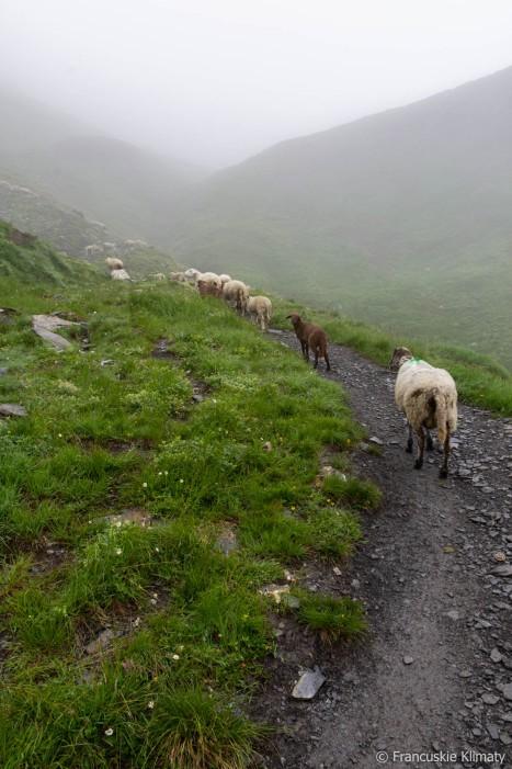 W drodze na przełęcz Anterne.